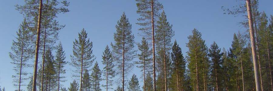 skogsbruksplan kostnad
